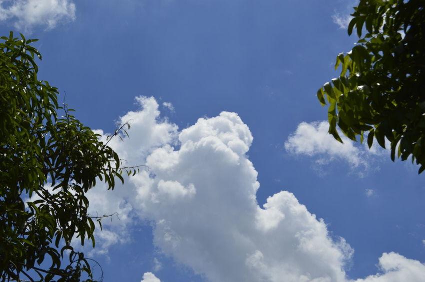 Experimenting with daylight shooting EyeEm Best Shots Philippines Eyeem Philippines Snoworld.one/bestshot Bestshot Cloud Sky Tree Blue Leaf Tree Area Sky Cloud - Sky Cumulus Cloud Cumulonimbus Stratosphere Sky Only Heaven Cloudscape