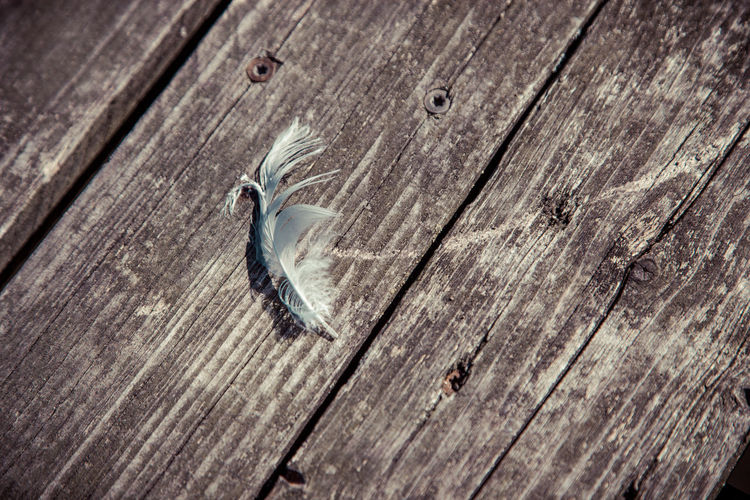 Lonely feather