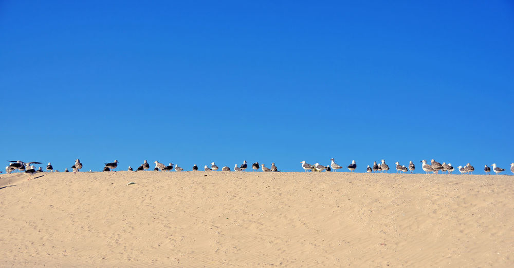 Low angle view of people on beach against clear blue sky