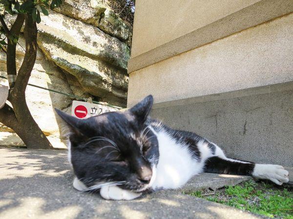 Stray Cat Cat Gato Cats Of EyeEm Relaxing Catstagram Zzz at Enoshima 江の島 in Japan
