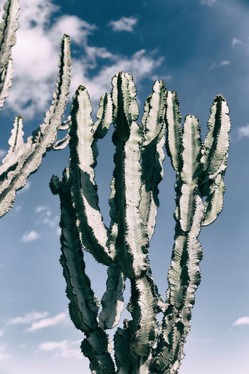 Low angle view of succulent plant against sky