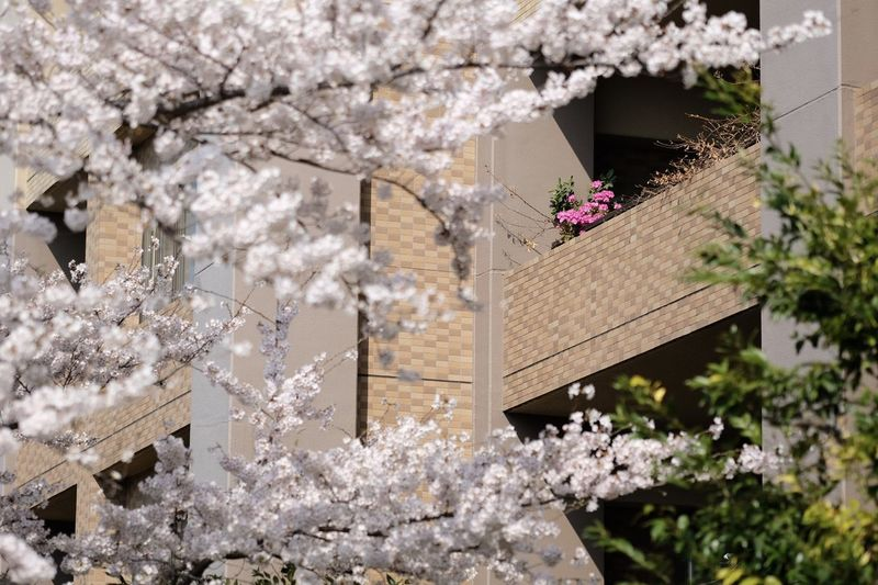 View of white flowering plants against building
