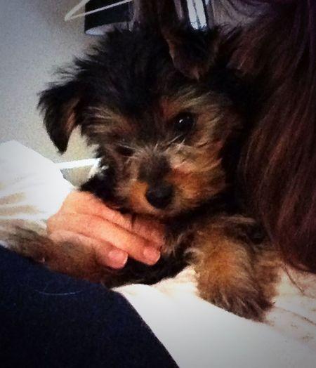 My little Puppy❤ Cutie