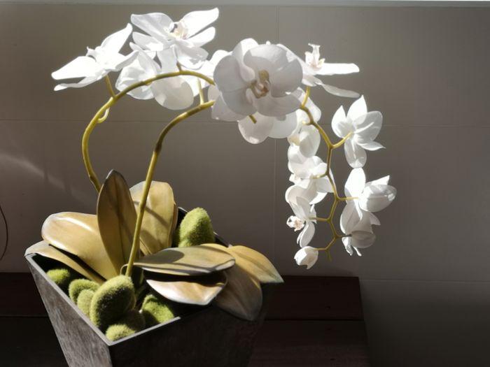 Orchid Flower Head Flower Crumpled Paper Studio Shot Orchid Petal Close-up