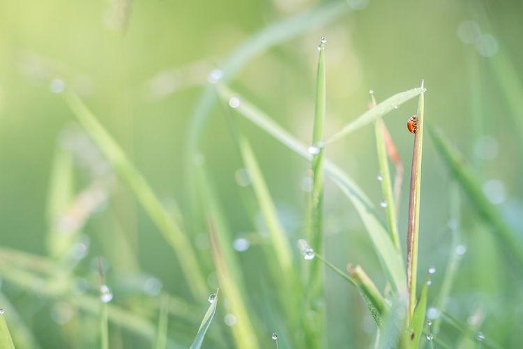 lady bug Plant