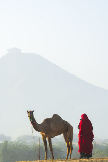 Mountain Sky Domestic Animals Real People Mammal Nature One Animal One Person Pets Beauty In Nature Day Domestic Land Field Livestock Scenics - Nature Clear Sky Outdoors Camel Woman