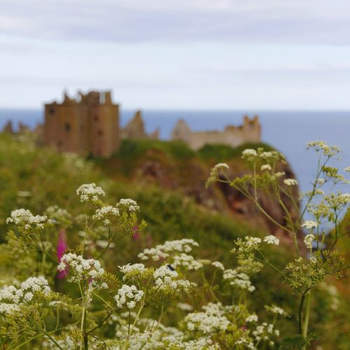 The Great Outdoors - 2017 EyeEm Awards Dunnottar Castle Scotland Castels Landscape Grass Sky Travel Destinations Scenics Outdoors Travel Photography Canon 60d Place Of Heart EyeEm Selects Breathing Space Your Ticket To Europe Lost In The Landscape An Eye For Travel Go Higher