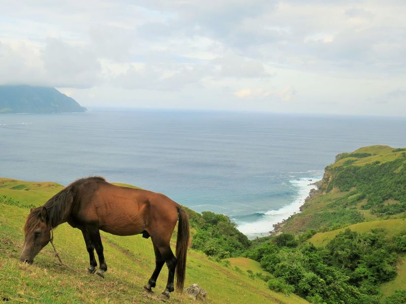 horse and batanes landscape Animal Themes Beauty In Nature Domestic Animals Grass Graze Grazing Grazing Animals Grazing Horse Horizon Over Water Horse Landscape Landscape Photography Landscape_Collection Landscapes Mammal Nature One Animal Outdoor Photography Scenics Sea Sky