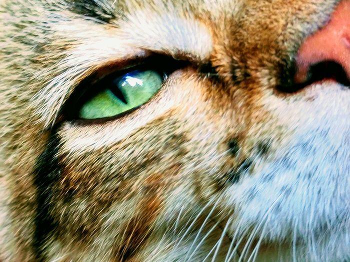Eye Em Animal