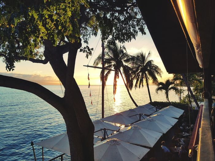The view from our table at Kimo's restaurant in Maui Hawaii Dinner Sunset Palm Trees Calm Seas Ocean Views Paradise Modern Hospitality
