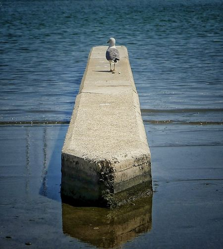 Seascape Photography Bird Pelican Nature Summer No People Bird On The Beach Alone Daylight Sunny Day Cement Structure