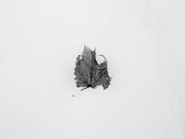 Black & White Bnw Nature