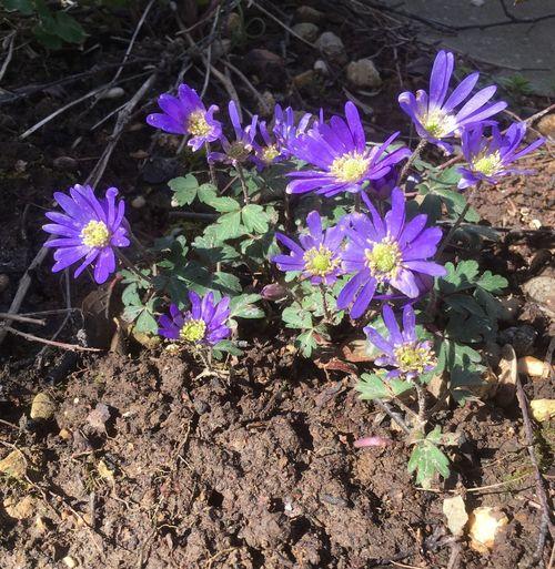 Le printemps est arrivé ! Flowering Plant Flower Plant Fragility Vulnerability  Freshness Beauty In Nature