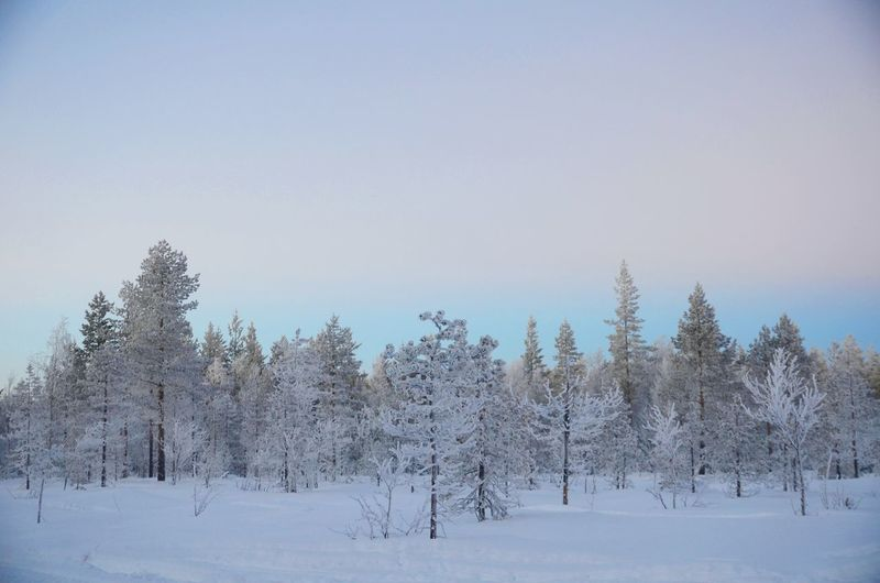 Blue Cold Temperature Day Finland Forest Freshness Landscape Lapland Nature No People Outdoors Polar Climate Rovaniemi Sky Snow Tree Winter