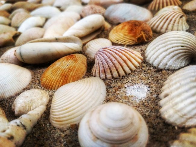 Seashells Wall deco