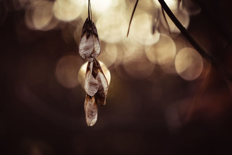 In My Soul 😊 Bokehlicious Bokeh Lights Bokeh Love Exceptional Photographs Silhouette EyeEm Best Shots EyeEm Nature Lover Eye4photography  Poland Autumn colors Autumn Collection Forestwalk Hanging Feather  Close-up