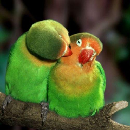@hemnkamaran Love Loveneverdie Iloveyou Lovebird iraq imissyou instagramhub kurdistan slemani assulaimania kissing