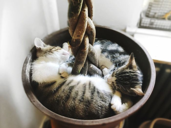 High angle view of kittens sleeping in potted plant