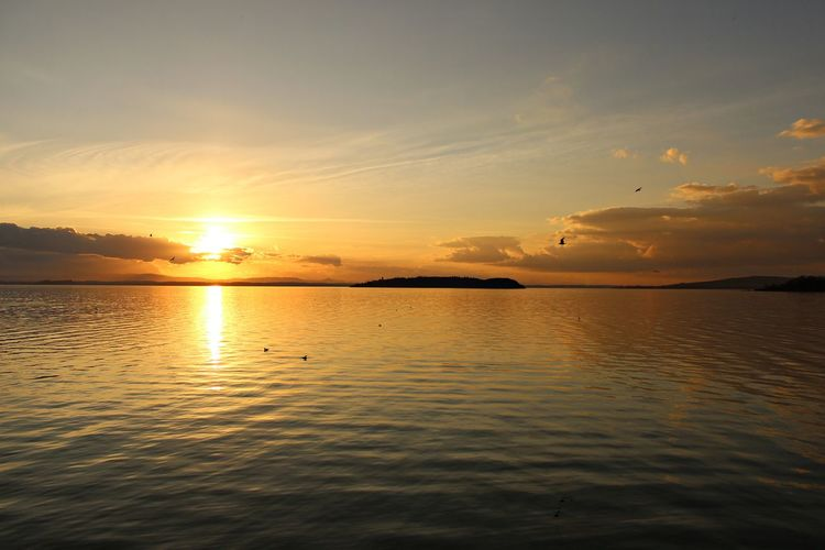 Italy, Umbria: Sunset on Trasimeno Lake. Orange Perugia Beauty In Nature Bird Cloud - Sky Clouds Flying Horizon Horizon Over Water Italy Lake Nature Outdoors Passignano Sul Trasimeno Reflection Scenics Silhouette Sky Sun Sunset Tranquil Scene Tranquility Umbria Water Yellow