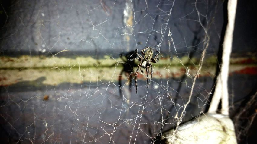 Spider Web Spider Animal Themes One Animal Insect Animals In The Wild Focus On Foreground Wildlife Close-up Spinning Fragility Nature Web Day Full Frame Zoology Beauty In Nature Intricacy No People Complexity