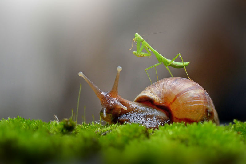 Snail Animal Outdoors Snail Insect Plant Invertebrate Close-up No People Animals In The Wild Mollusk Gastropod Selective Focus Animal Body Part Animal Themes One Animal Animal Wildlife Animal Antenna Shell Green Color Animal Shell Day Surface Level