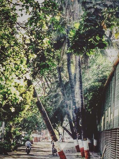 Nature Branch Kids Lovewatchingthemplay Sunlight Trees Greenery💛 Savetreesplease Theyalsohavelife❤️Goodmorning🌞