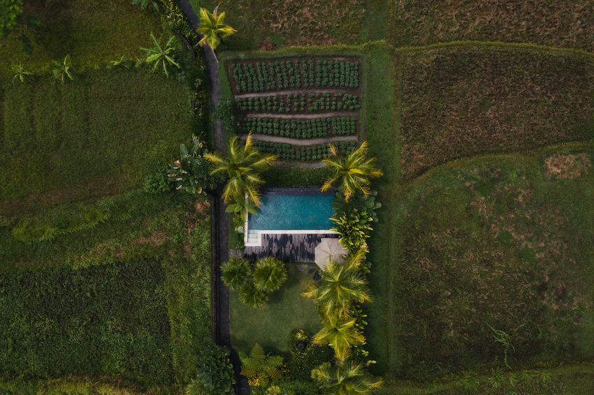 Plant Nature Architecture No People Green Color Growth Day Water Grass Outdoors Built Structure Land Tree Tranquility Field Beauty In Nature Tranquil Scene Gate Agriculture Hedge Bali Indonesia Drone