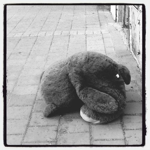Street Photography Netanya Forgotten Toys Teddy