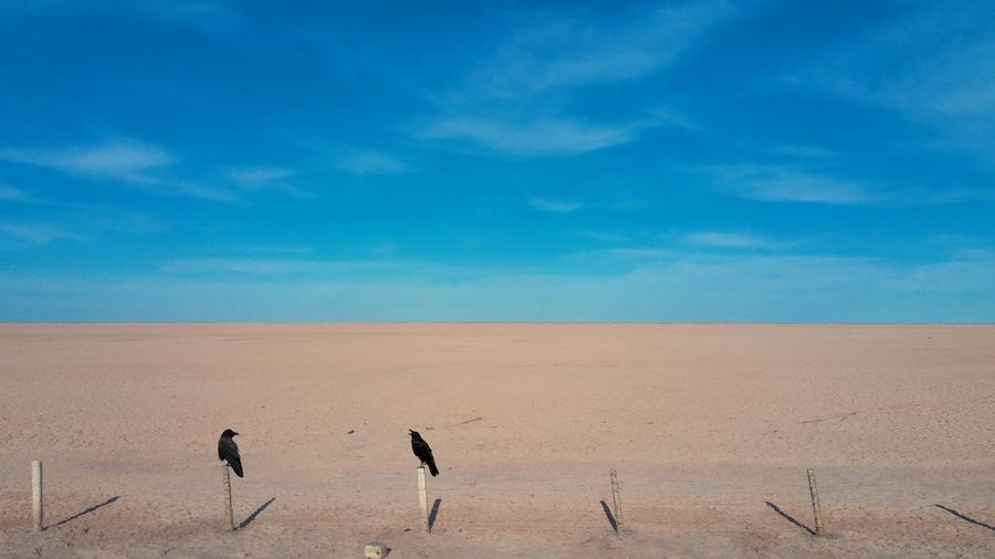 Crow Landscape Sky Day EyeEm Selects Sand Dune Bird Desert Arid Climate Blue Sand Full Length Water Horizon Arid Landscape Flock Of Birds