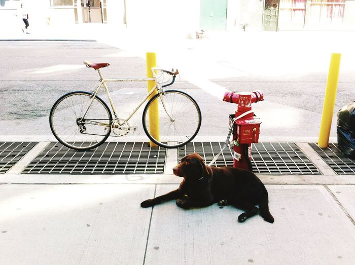 Dog Tied On Fire Hydrant Near Bicycle Parked On Footpath