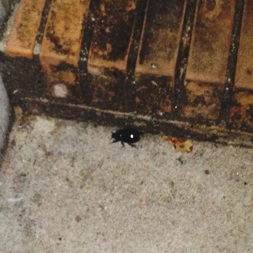 Scarafaggi sca sca scarafaggi Icolpidelle1:30 Chetepiasse Bbbagarozzo Bbbozzo