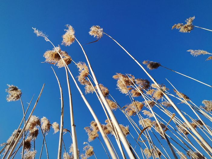 Marshes Winter Wind Nature Beautiful Nature Blue Clear Sky Sky Flower Head