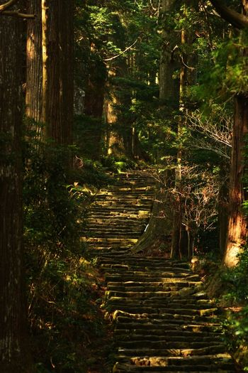 Tree Forest Nature No People 大門坂 Beauty In Nature 階段 Japan The Week On Eyem