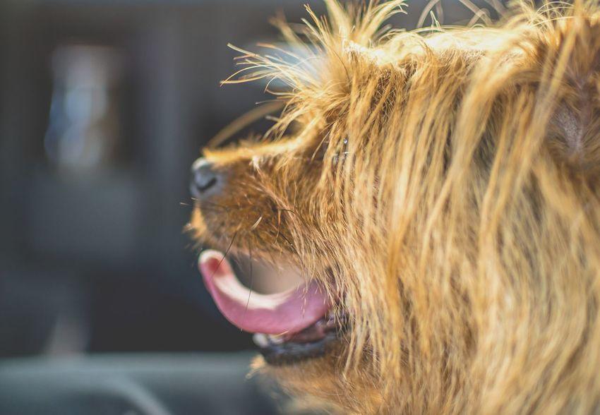 Dogs Dogslife Dogs Of EyeEm Dogstagram EyeEm Dogs EyeEm Dog Lover Doglover Dog Love Dog Dogoftheday Dogsofinstagram Dog Lover EyeEm Best Shots Pets EyeemShot Like4like Follow4follow Followme Follow Like Likes Tagsforlikes EyeEm Gallery Pets Of Eyeem Eye4photography