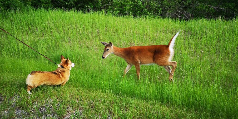 View of two dogs on grassy field