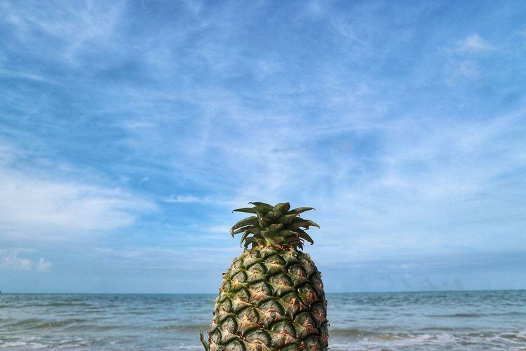Beach Time Tree