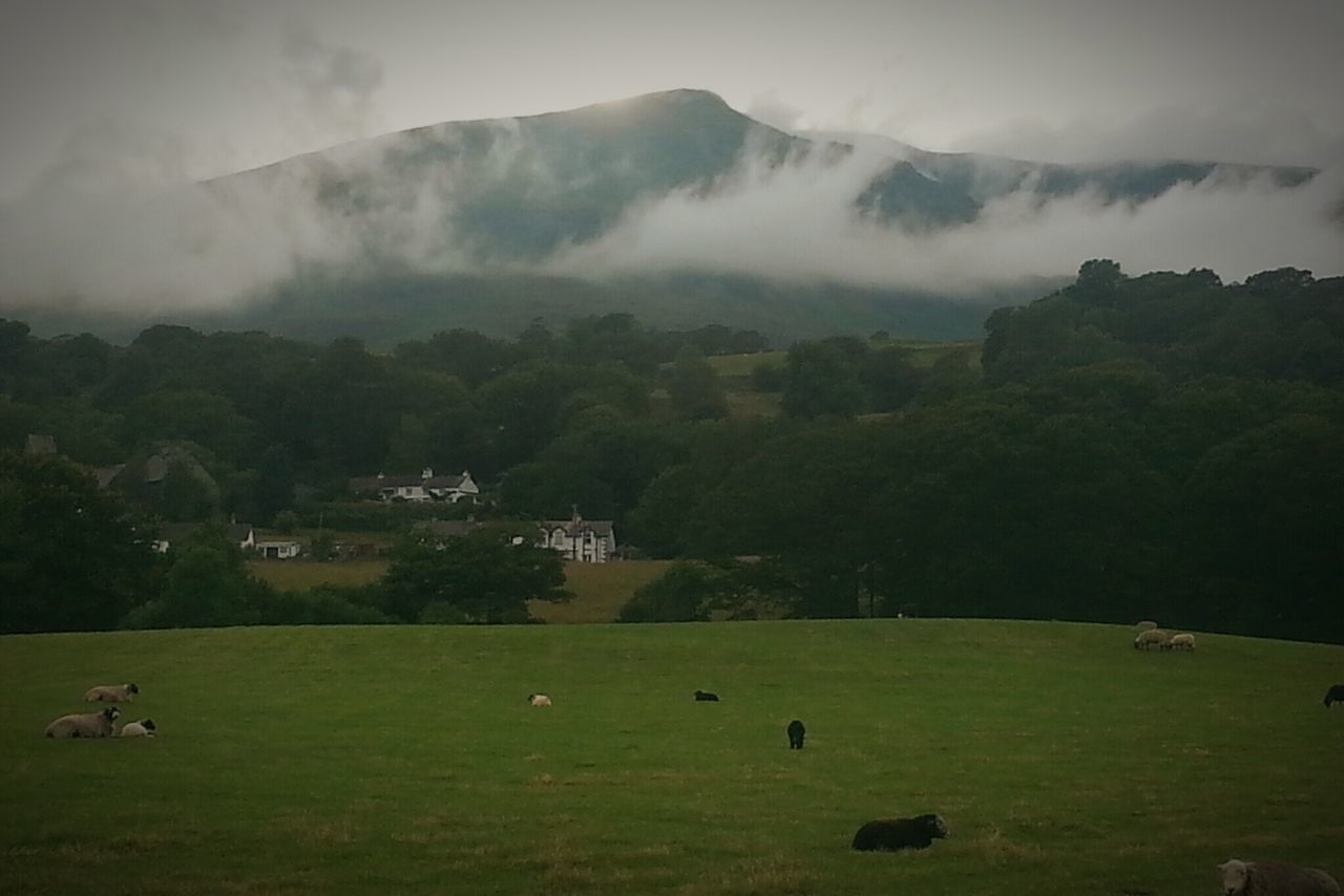 mountain, tree, nature, green color, landscape, field, grass, beauty in nature, outdoors, sky, scenics, no people, day, animal themes, fog, large group of animals, architecture, mammal