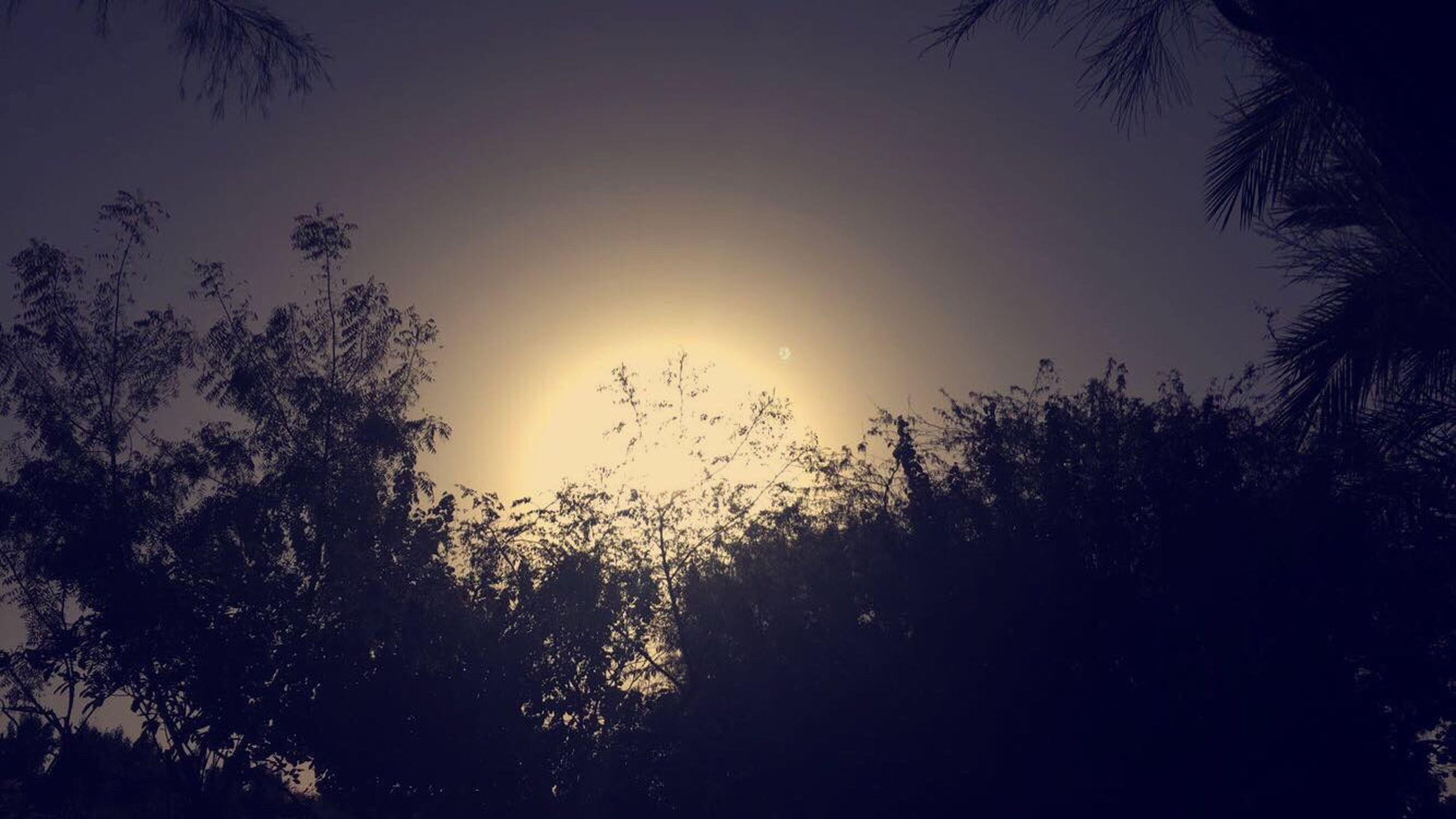 sunset, nature, tree, silhouette, sky, sun, beauty in nature, tranquility, no people, backgrounds, outdoors, day