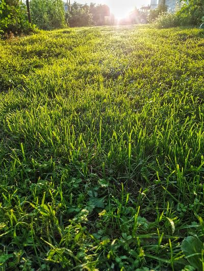 trawa, Tree Sunlight Field Soccer Field Grass Green Color Farmland Cultivated Land