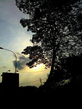 Sun Sky Taking Photos Tree Clouds And Sky Evening Sky Sun_collection