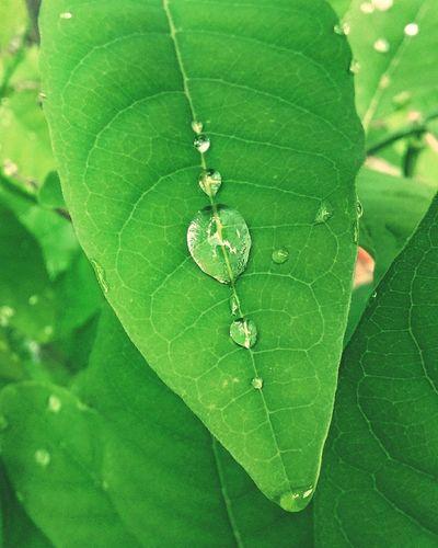 Natureza Explícita Demonstraçoes Do Amor. Love.  Life