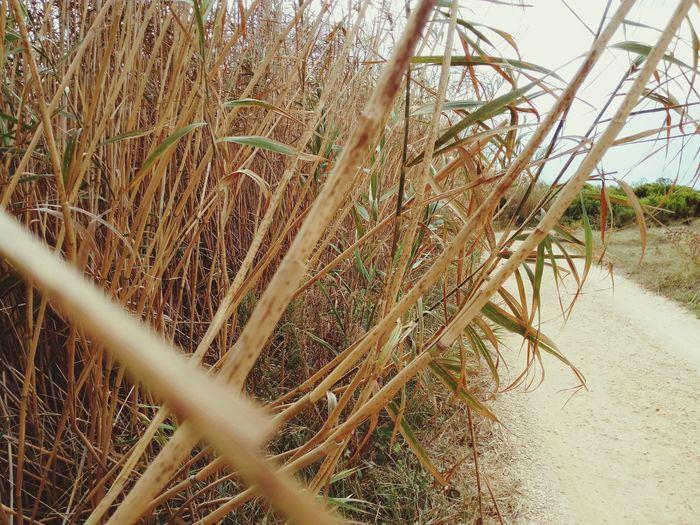 Canne Bambú Natura Nature Street Strada