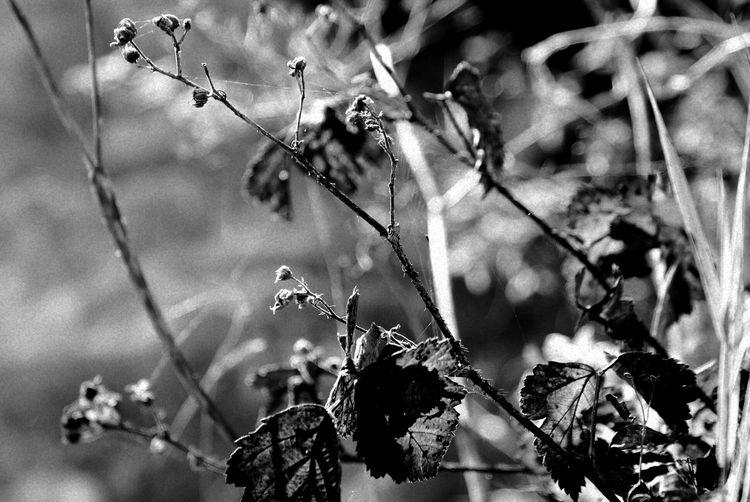 Branch Flower Close-up Plant Sky