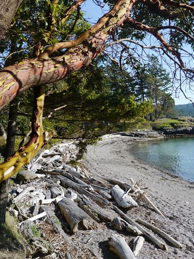 Secret Cove - Versteckter Strand Awesome Nature Naturschönheit Nichtstun Busy Doing Nothing Einsamer Strand Untamed Beauty Treibholz Driftwood Baker's Beach Arbutus Tree Strawberry Tree Robinson Crusoe Secluded Beach Secret Cove Hidden Cove Tranquility Kanada Canada British Columbia Sunshine Coast Bc Tree Nature Rock - Object Day Water Outdoors Branch Beauty In Nature No People