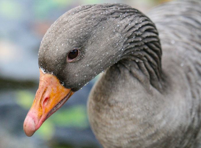 One Animal Animal Animal Themes Animals In The Wild Animal Wildlife Vertebrate Bird No People Outdoors Animal Body Part Nature Animal Head  Zoology