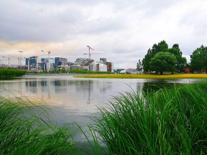 City Water Tree