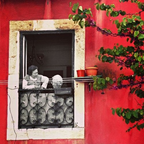 da minha janela vejo o mundo from my window I see the world Janela Arvore Mundo Vista Casal Idosos Portadosol Castelo Alfama Lisboa Portugal Window Tree World View Viewpoint Couple Oldpeople Old Lisbon