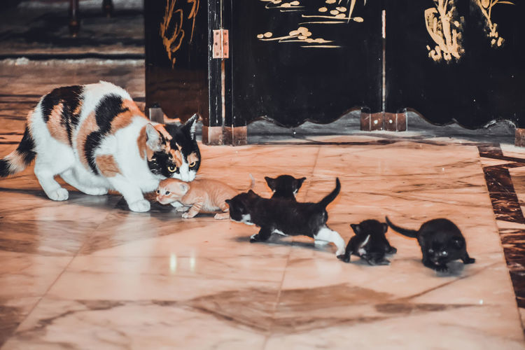 Adapted To The City Animal Themes Baby Cat Cat Cat Carry Cats Check This Out Domestic Animals Domestic Cat Egyptian Cat Exceptional Photographs Eye4photography  EyeEm Best Shots Family Feline First Eyeem Photo Hello World Indoors  Mammal Mau No People Pets Popular Photos Togetherness Transportation Lieblingsteil Welcome To Black The Great Outdoors - 2017 EyeEm Awards Let's Go. Together. Pet Portraits Press For Progress This Is Family