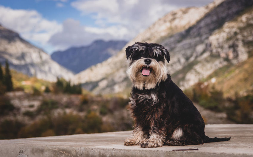 Animal Themes Day Dog Domestic Animals Focus On Foreground Mammal Mountain Mountain Range Nature No People One Animal Outdoors Pets Sitting Sky