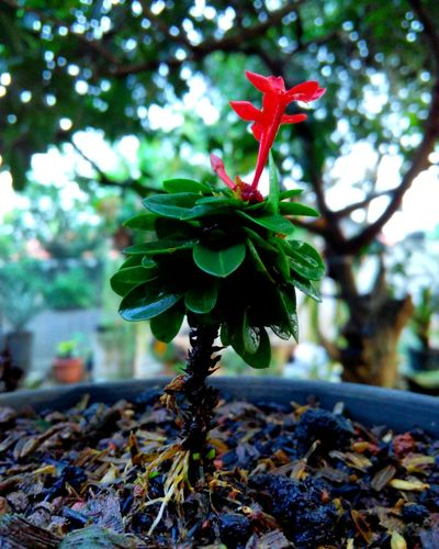 Focus On Foreground Growth Leaf No People Plant Nature Green Color Day Close-up Outdoors Flower Red Beauty In Nature Tree Freshness